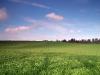 bungay-field