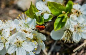 ladybug-1443521-m